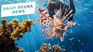 Daily Scuba News - Cyprus Has A Massive Lionfish Problem