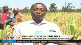 Many farms experiencing crop failure: NTV Spot check