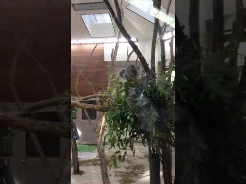 コアラ 埼玉県こども動物自然公園に行って来ました!