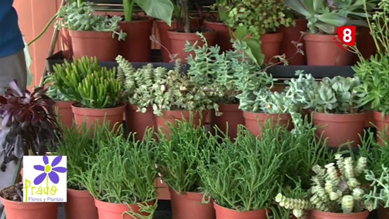 Plantas suculentas tu jard n a punto youtube - Punto jardin ...