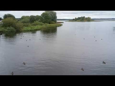 Утки , лебеди и чомги в городе Торопец  .Птицы спасаются от охотников в черте города ,у моста.Умные.