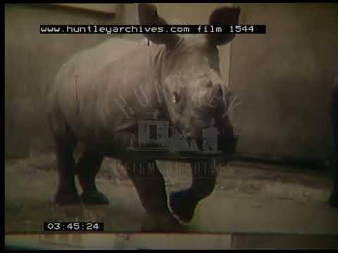 Washington DC Zoo, 1950s - Film 1544
