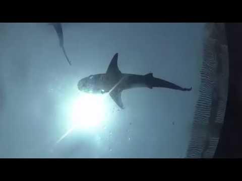 Water Slides At Atlantis Aquaventure Dubai Atlantis The Palm (19/08/2017)