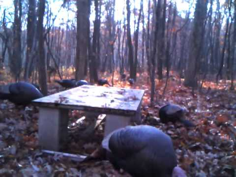 Deer and Turkey