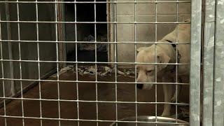 Death Row Dogs   Full Length Documentary