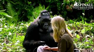 Heart-warming moment Damian Aspinall's wife Victoria is accepted by wild gorillas OFFICIAL VIDEO