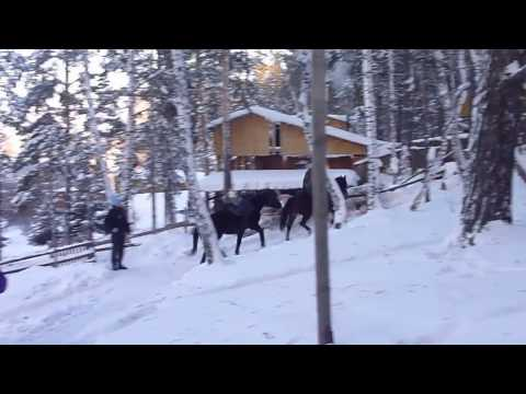 SIBERIAN WINTER TOURS - Sabbatical in the Altai Region - Horse Riding Vacation SMS Frankfurt