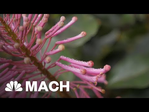 What Will Climate Change Do To Cloud Forests? | Mach | NBC News