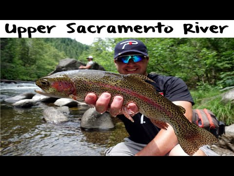 Upper Sacramento River Trout Fishing
