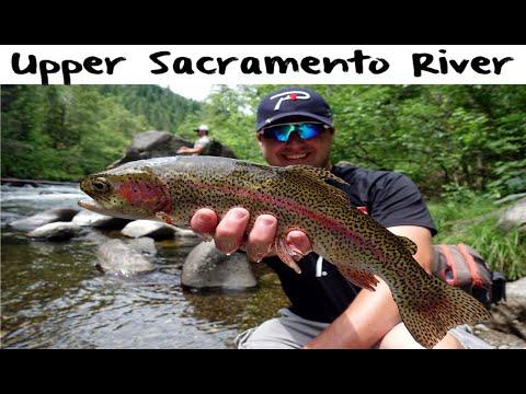 Upper Sacramento River Trout Fishing