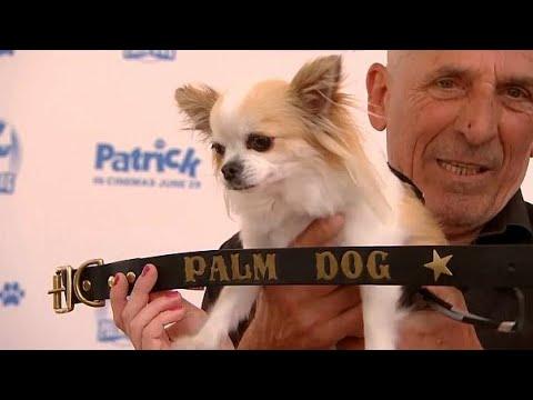 كلب -شيواوا- يفوز بجائزة السعفة الذهبية في مهرجان -كان-  - 11:22-2018 / 5 / 20