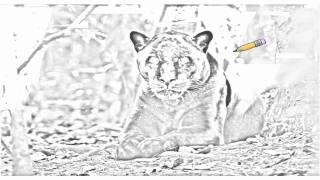 Auto Draw 2: Awaiting Jaguar, Belize