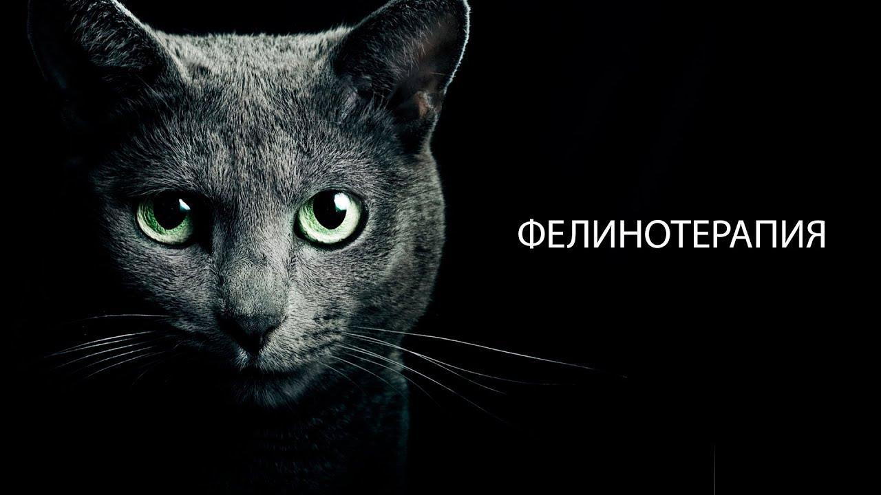 Клип как у кота 9 жизней