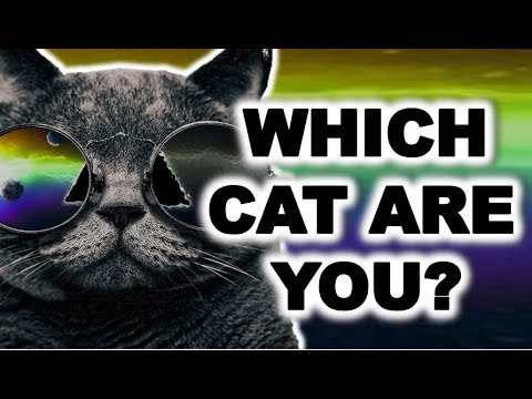 Which CAT BREED are you?