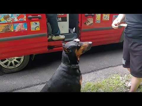 Doc Reno - Doberman does tricks for the ice cream truck