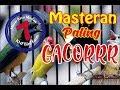 Jenis Burung Dengan Suara Masteran Yang Paling Cocok Untuk Gacor  Mp3 - Mp4 Download