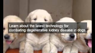 Reverse Dog Kidney Disease Symptoms | Natural Dog Food Recipes To Halt Dog Kidney Disease Symptoms