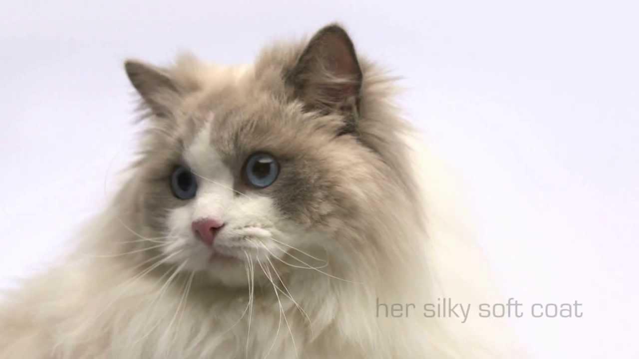Bezsrstá mokrá kočička