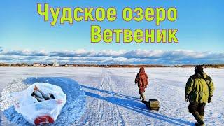 Чудское озеро Ветвеник Супер рыбалка