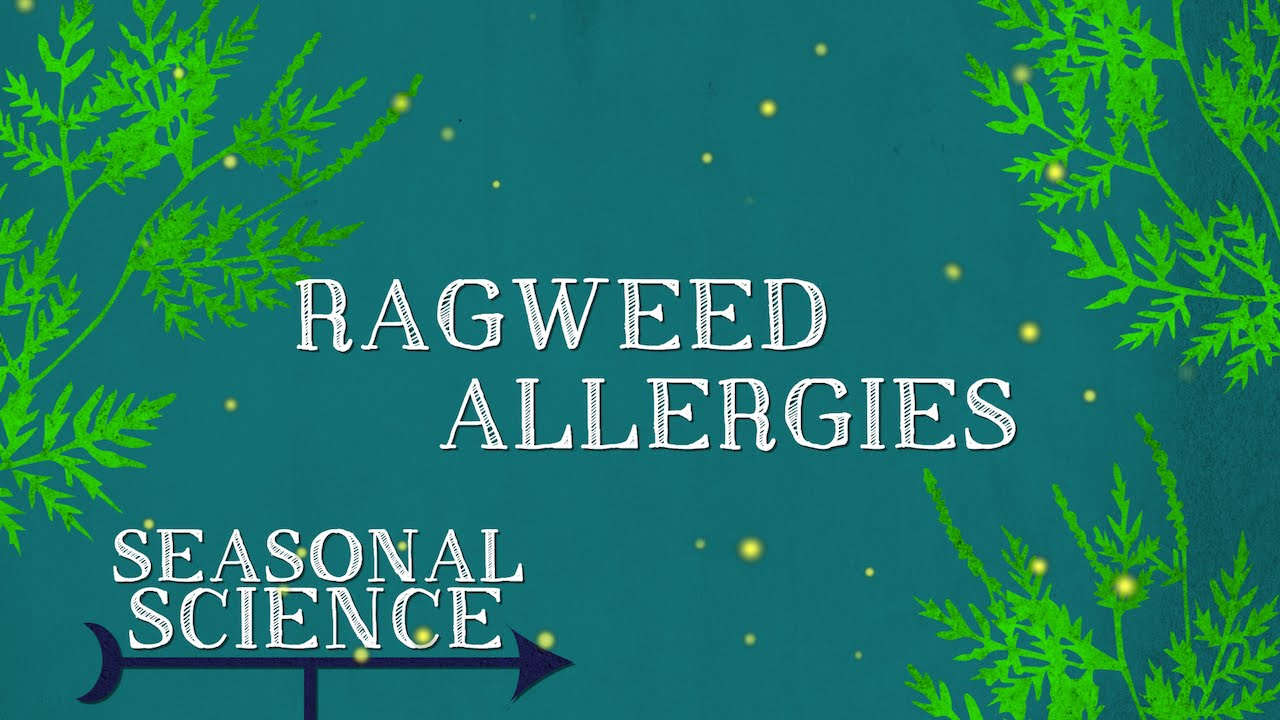 Ragweed Allergies | Seasonal Science | UNC-TV