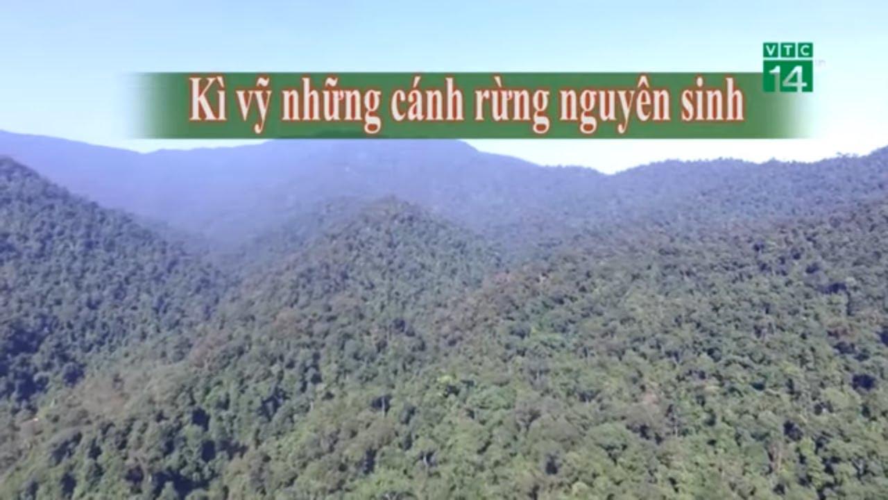 Kì vĩ những cánh rừng nguyên sinh  VTC14