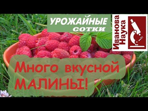 Сделайте ТАК для большого урожая малины, смородины и крыжовника! Для вкусных и полезных ягод.