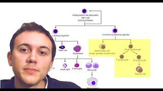 Blood Cancers Explained: Leukemia, Myeloma, Lymphoma, and more