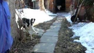 Dick et Roxy ouvrant et fermant la porte de la clôture - P1030703.MOV