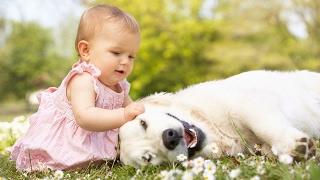 Em học con vật và tiếng kêu | Bé tập nói tên các loài động vật tiếng việt |Dạy trẻ thông minh sớm
