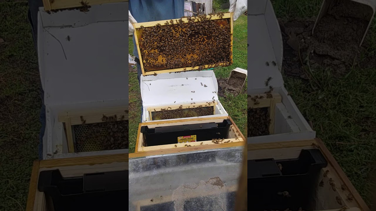 Installing A Honey Bee Nuc Into An 8 Frame Hive