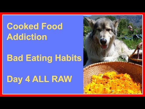 My Experiences With Cooked Food Addiction, Bad Eating Habits & Day 4 ALL RAW