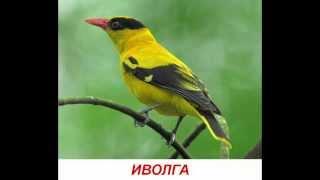 Звуки птиц для детей. Развивающее видео для детей от года