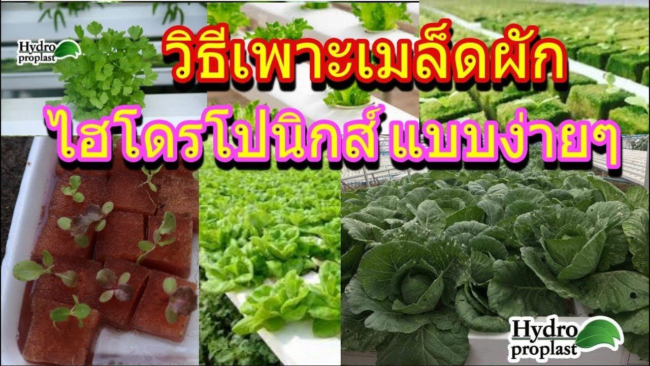 การปลูกผักไฮโดรโปนิกส์ EP1: วิธีเพาะเมล็ดผักสลัด ปลูกผักไร้ดิน ผักสวนครัว  How to Hydroponics
