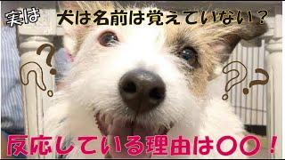番組提供:ペットライン株式会社 http://www.petline.co.jp/ なんと、な...