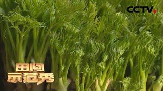 《田间示范秀》 专家亲授 让刺嫩芽出好芽 20200320   CCTV农业