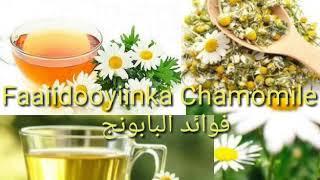 فوائد البابونج   Faaiidooyiinka chamomile
