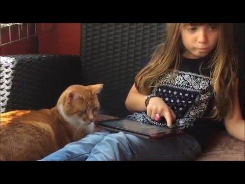 Melis Eskisehir Kedi Cafe Youtube