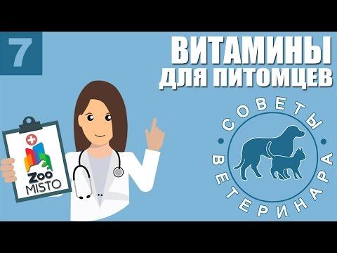 Вопрос ветеринарному врачу