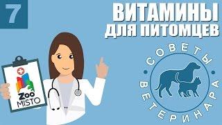 Витамины для животных | Какие витамины нужно давать собаке или кошке | Советы Ветеринара