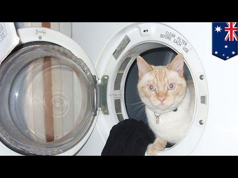 Kucing selamat setelah terjebak dalam mesin cuci menyala selama 30 menit- TomoNews