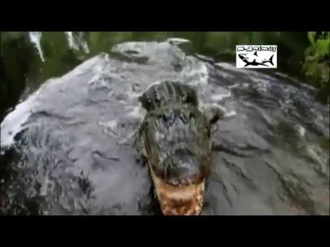 Pântano Perigoso Ep 32