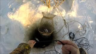 Зимний перемёт на налима Проверка 1 декабря