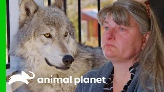 Owners Need To Make A Tough Decision About Their Beloved Pet | Wolves and Warriors