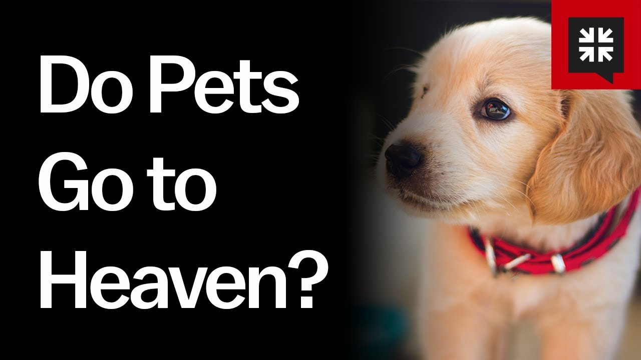 what does the bible say about pets going to heaven