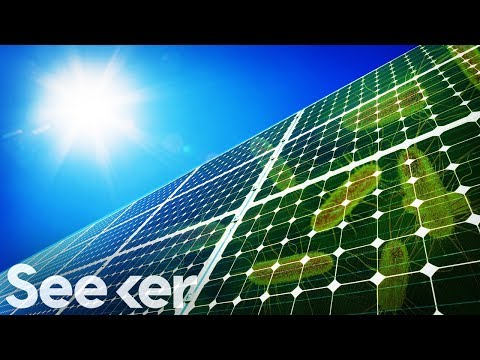 Scientists' Crazy Plan to Power Solar Panels with E. Coli