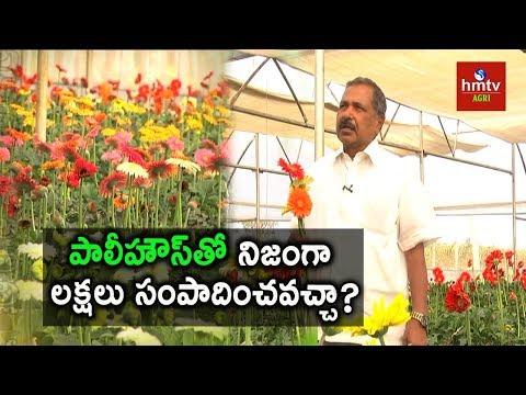 Polyhouse Farming Profits and Advantages | Ideal Farmer Narasimha Reddy | hmtv Agri