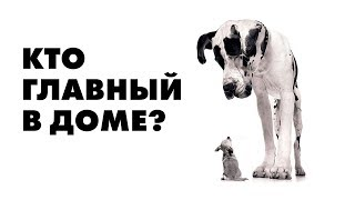 В доме две собаки