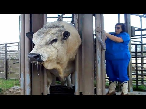 The world's largest cow factory will give you goosebumps.