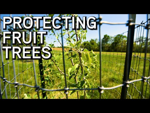 Protecting Fruit Trees For Wildlife