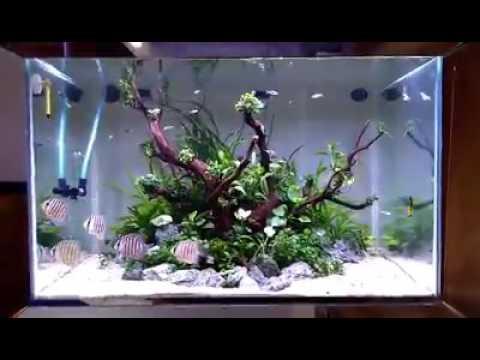 Amazing Home Aquariums design ideas and photos on best shark aquariums, ultimate aquariums, cool aquariums, fish tanks aquariums, most beautiful aquariums, petco aquariums, most unique aquariums, amazing saltwater aquariums, amazing aquariums and reefs, coral reef aquariums, amazing freshwater aquariums, world's best aquariums, crazy aquariums, most amazing aquariums, acrylic aquariums, awesome reef aquariums, custom reef aquariums, greatest aquariums, creative aquariums, built in aquariums,